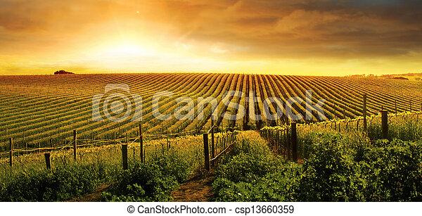 Stunning Vineyard Sunset - csp13660359