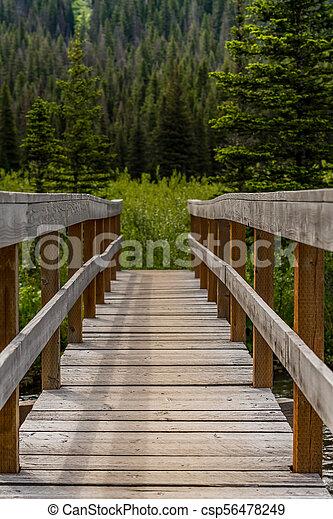 Sturdy Bridge in Pine Forest - csp56478249