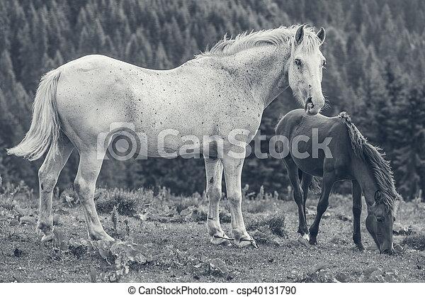 Roan weiße Stute mit ihrem Fohlen - csp40131790