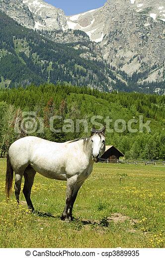 Weiße Stute - csp3889935