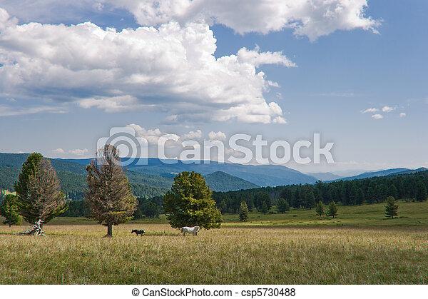 Weiße Stute und Colt in der grenzenlosen Altai-Wohnung - csp5730488