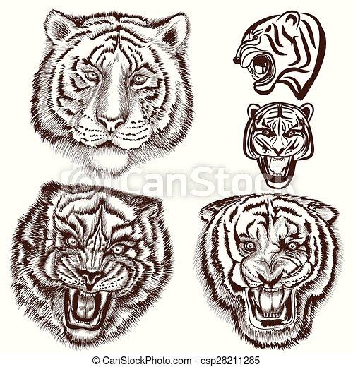 style, ensemble, gravé, tigres, main, dessiné - csp28211285