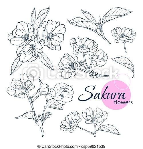 Style Ensemble Illustration Line Art Fleur Japonaise Main Flowers Coloration Adulte Children Dessine Livre Canstock