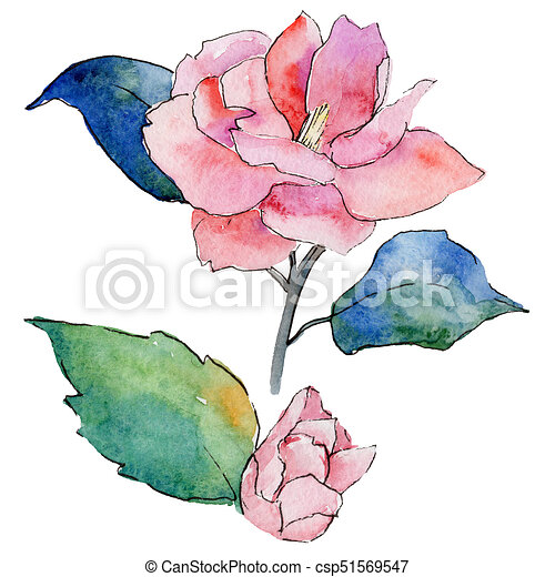 Style Fleur Isolated Camelia Aquarelle Wildflower Style