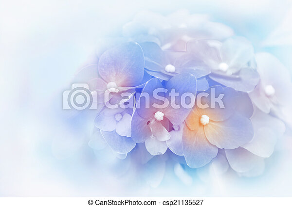 style, fond, fleurs, hortensia, barbouillage - csp21135527