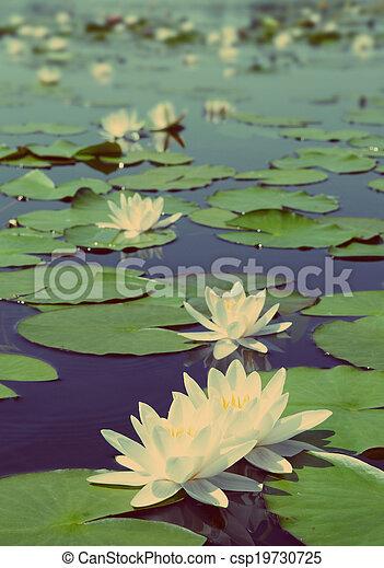 style, vendange, -, lac, retro, nénuphar, fleurs - csp19730725