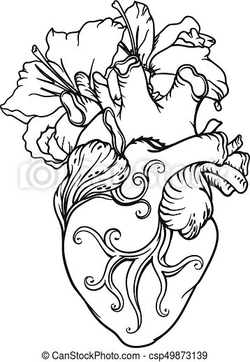 Heart Drawing stylized anatomical human heart drawing. heart with white lilies in  romantic style.