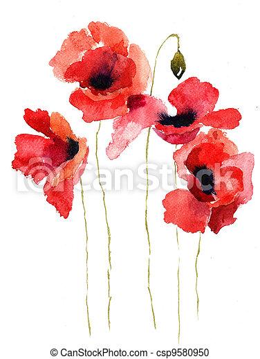 stylizovaný, mák, květiny, ilustrace - csp9580950