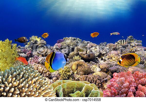 Mundo subterráneo. Peces corales de mar rojo. Egipto - csp7014558