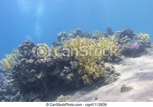 Coral arrecife en el fondo del mar tropical, bajo el agua - csp41112639