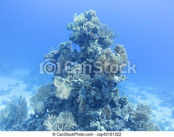 Coral arrecife en el fondo del mar tropical, bajo el agua - csp43161322