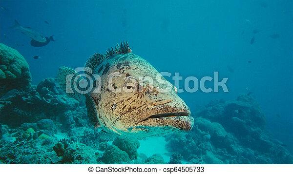 Pescado en Malabar bajo el mar, Papua Niugini, Indonesia. - csp64505733