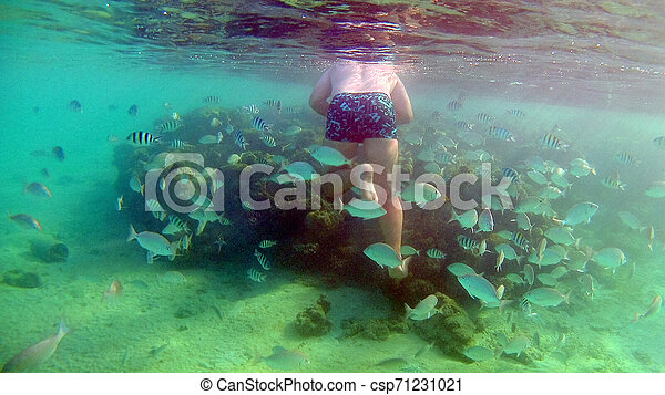 El hombre alimenta peces bajo el agua con una máscara para bucear en el Mar Rojo - csp71231021