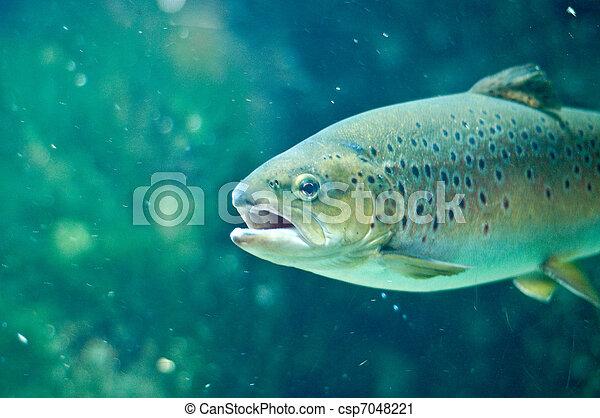 submarino, pez, marina, natación - csp7048221