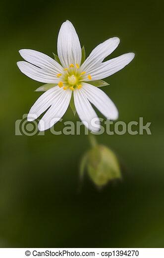 Subtle flower - csp1394270