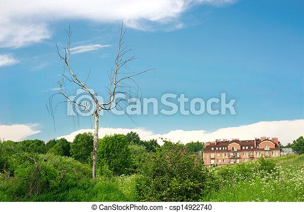 Un árbol seco en el suburbio - csp14922740