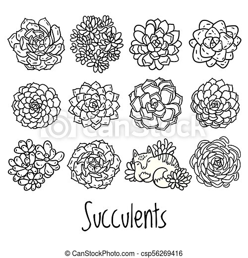 Succulent Outline Design With Cat In Cartoon Style Ideal For Coloring Page