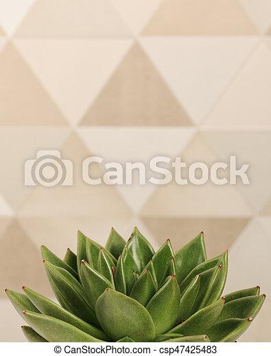 succulent plant close up - csp47425483