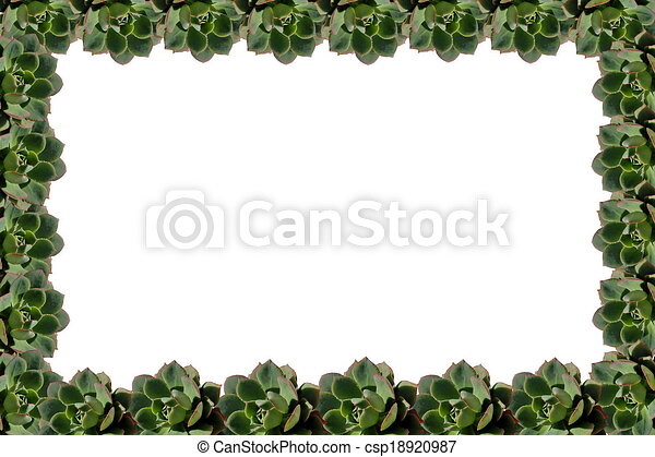 succulent plant frame isolated on white background stock ...