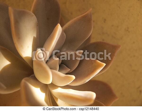 Succulent plant - csp12148440