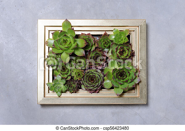 succulent plants decoration - csp56423480