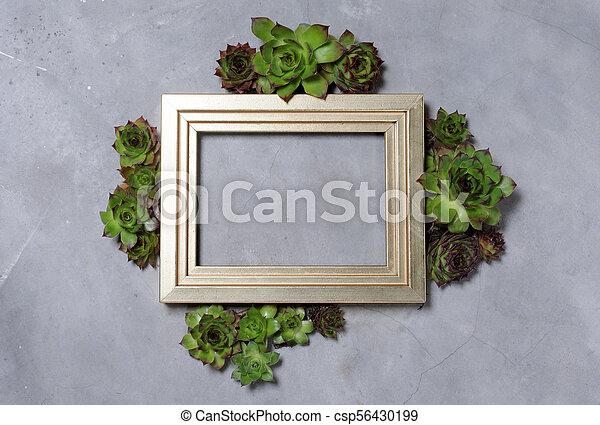 succulent plants decoration - csp56430199