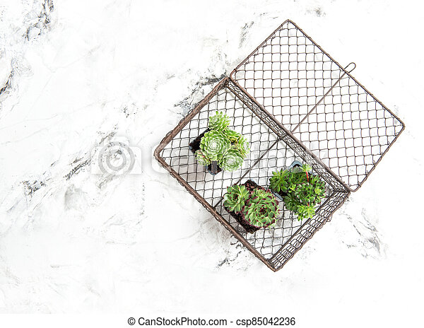 Succulent plants decoration white marble background copy space - csp85042236
