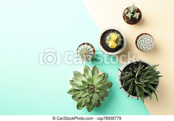 Succulent plants on two tone background, top view - csp78938779