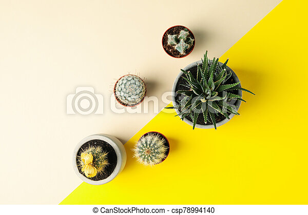 Succulent plants on two tone background, top view - csp78994140