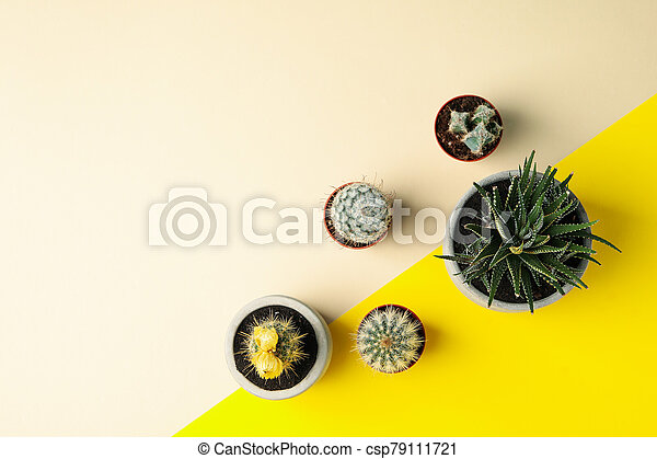 Succulent plants on two tone background, top view - csp79111721