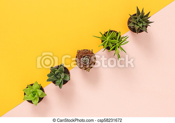Succulent plants on yellow and pink background - csp58231672