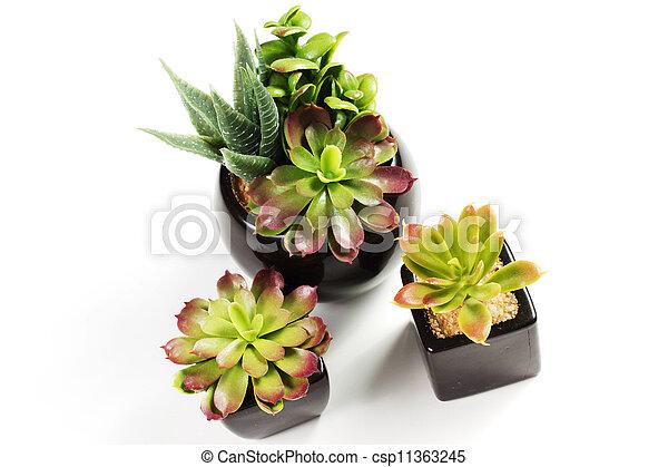 succulent plants - csp11363245