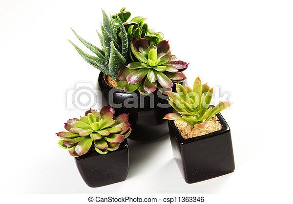 succulent plants - csp11363346