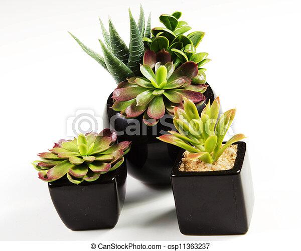 succulent plants - csp11363237