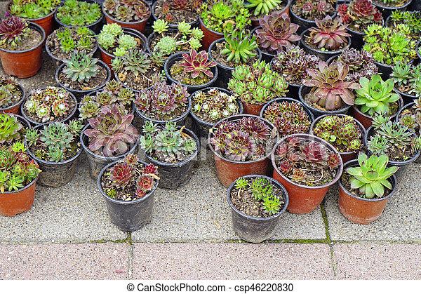 Succulent plants - csp46220830