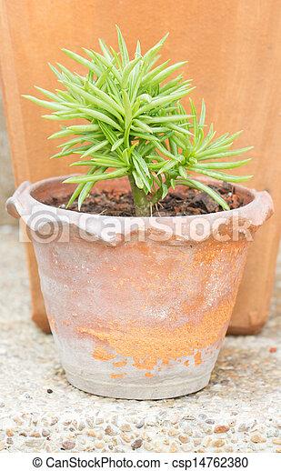 Succulent pot plant. - csp14762380
