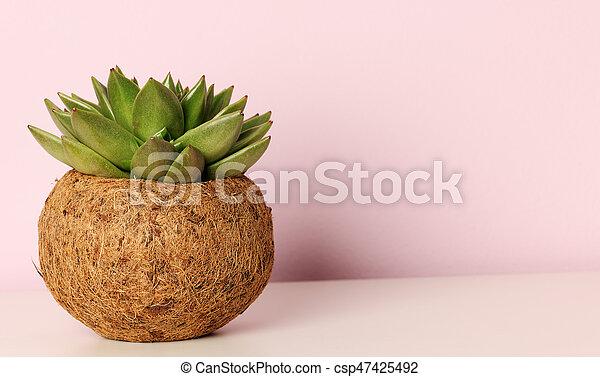 succulent potted plant - csp47425492