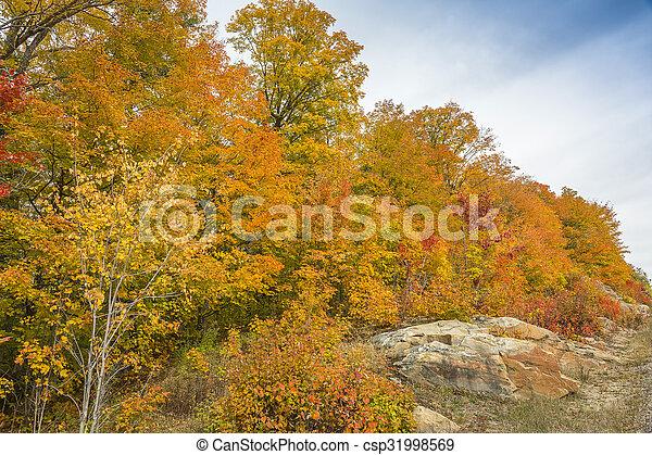 Sugar Maples Growing on Precambrian Shield in Autumn - Ontario, Canada - csp31998569