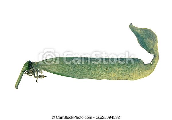 Sugar Snap Peas - csp25094532