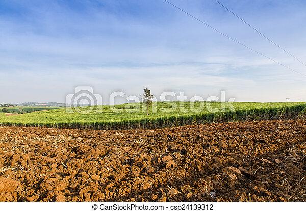 Sugarcane field agriculture tropical farm landscape - csp24139312