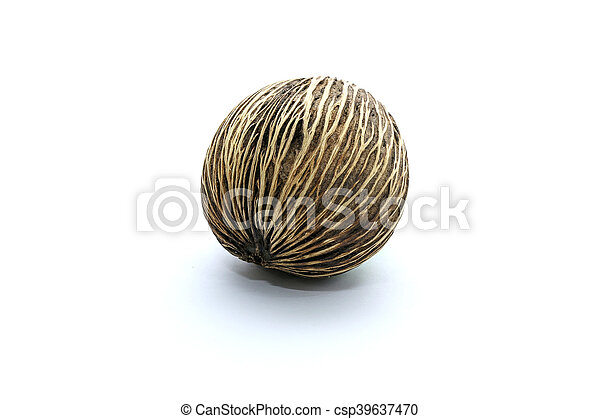 Suicide tree seed, Pong pong seed or Othalanga, Cerbera oddloam's seed on white background - csp39637470