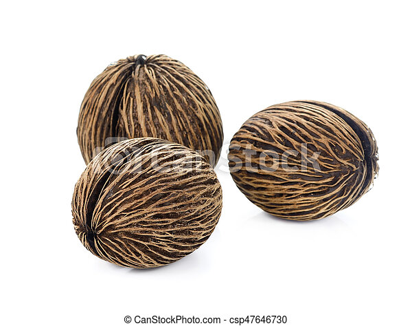 Suicide tree seed. Pong pong seed or Othalanga. Cerbera oddloam's seed on white background - csp47646730