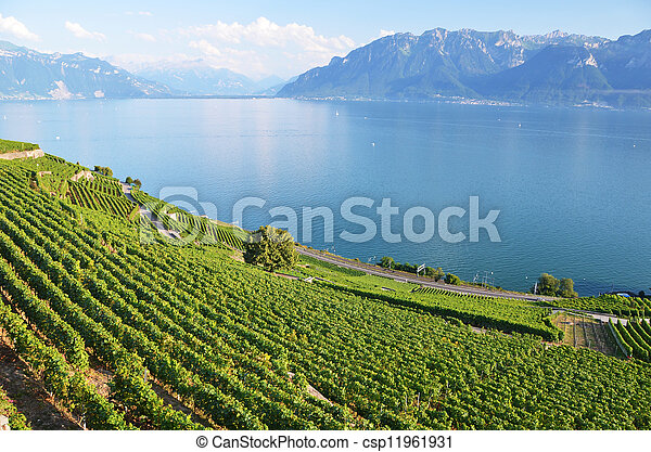 suisse, vignobles, région, lavaux - csp11961931