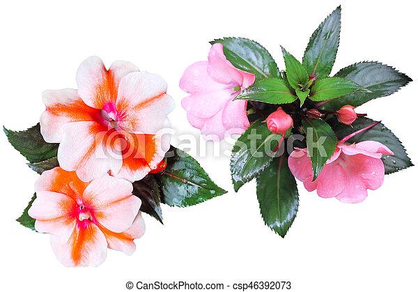 Sultana Flower Collection - csp46392073