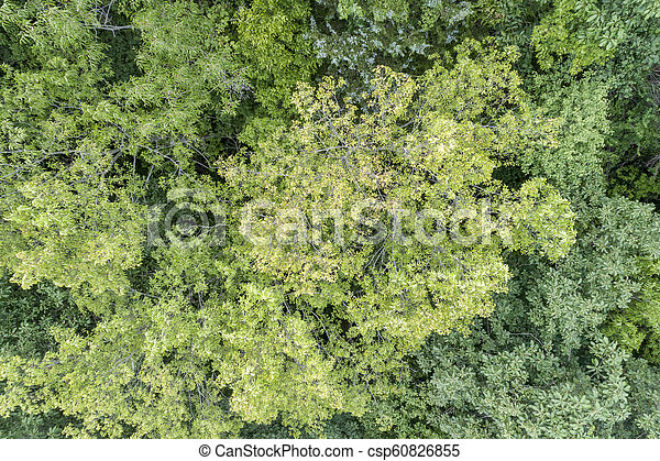 summer aerial view of green forest - csp60826855
