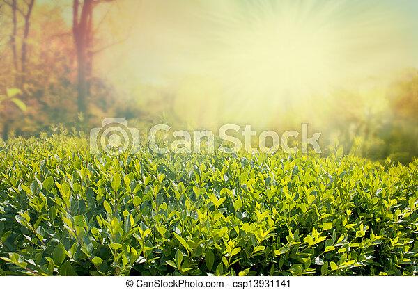 Summer background - csp13931141