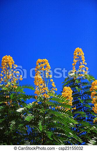 summer background. - csp23155032