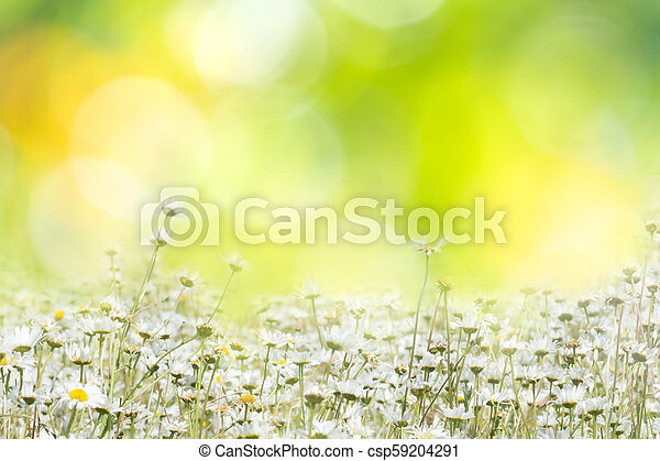 Summer background with flowers in a meadow - csp59204291
