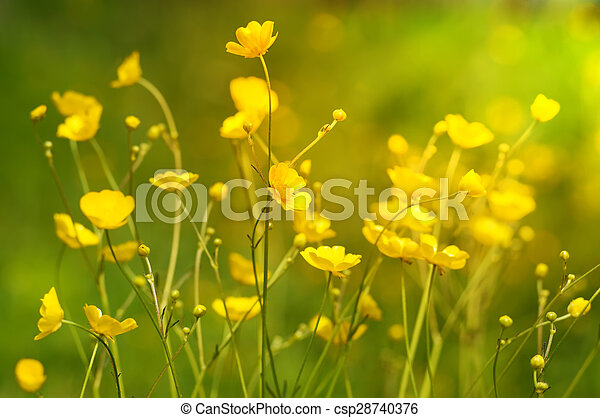 Summer background with yellow wildflowers - csp28740376
