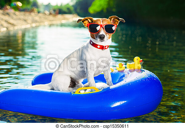 summer beach dog - csp15350611
